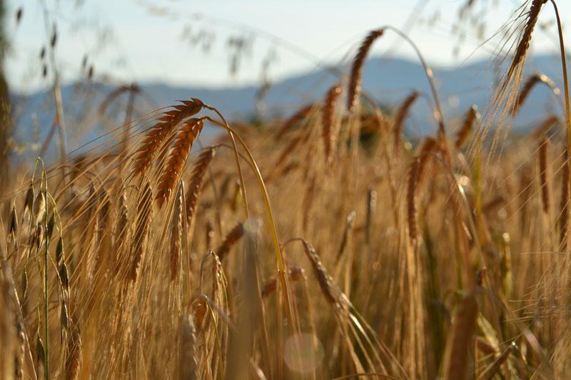 l'agriculture à taluyers 69