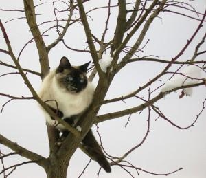 chat-dans-arbre